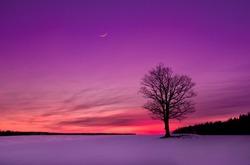 idyllic sunset in the field