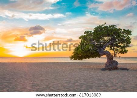 Idyllic view of tropical Aruba beach with Divi Divi tree at sunset Photo stock ©