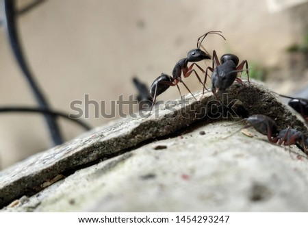 If an ant carries an object a hundred times its weight, you can carry burdens many times your size. #1454293247