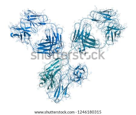 IgG1 monoclonal antibody (immunoglobulin). Many biotech drugs are antibodies. 3D rendering based on protein data bank entry 1igy.