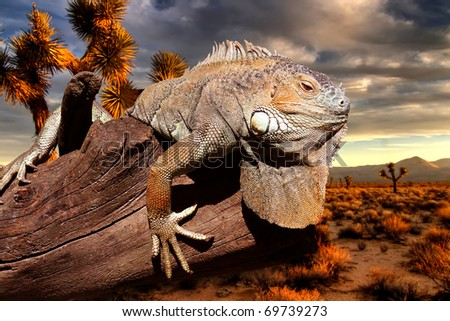iguana at sunset sitting on an old tree trunk
