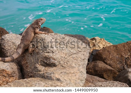 Iguana looking ahead about the sea #1449009950