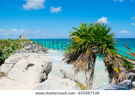 Shutterstock Iguana on the cliff in Tulum Ruins - Quintana Roo - Mexico