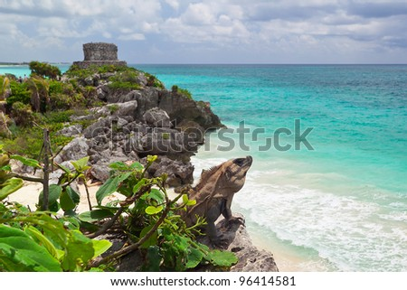 Iguana on the cliff of Tulum, Mexico
