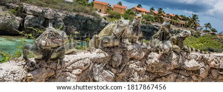 Iguanas - Views around the caribbean island of Curacao Сток-фото ©