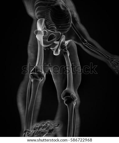 Ilium Bone Hip Bone Or Pelvis Human Anatomy Bone Skeletal