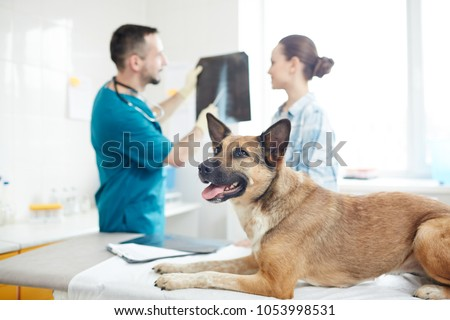 Ill german shephers lying on medical table while vet commenting its x-ray image to owner