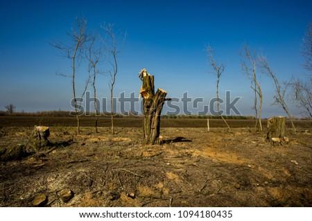 Illegal Felling of Forest Arrays. Deforestation, Destruction of Deciduous Forests. Damage to Nature. Ukraine. Europe. Pollution. #1094180435