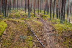 Illegal motorcycle race track in the forest, forest destroyed by motorcyclists (selective focus)