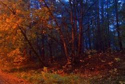 Illuminated deciduous forest in a fog at sunrise. Red light of street lanterns. Dark atmospheric autumn landscape. Panoramic view. Rural scene. Seasons, nature, environment