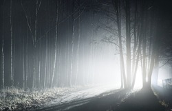 Illuminated pathway through the mighty trees at night. Scary forest scene. Tree silhouettes in the dark. Panoramic monochrome image. Nature, environment. Silence, loneliness, gothic concepts