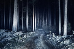 Illuminated snow-covered S shape rural road through the tall trees at night, Germany. Scary forest scene. Tree silhouettes in the dark. Dangerous winter driving, environmental conservation theme