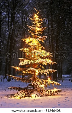 Illuminated snowy christmas tree in the woods at night