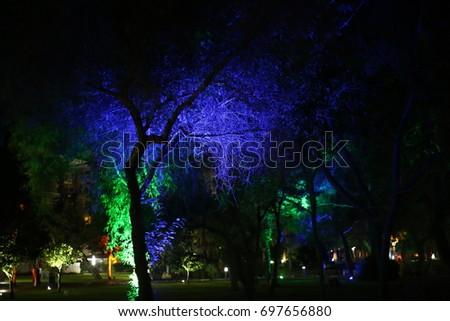 Illuminated trees #697656880