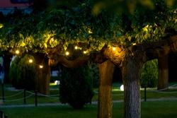 illumination garden light with electric garland of warm light bulbs on tree branches, dark illuminate evening scene of outdoors park nobody.