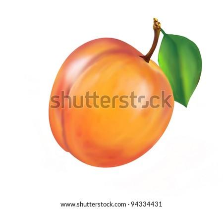 illustrated juicy nectarine isolated on white