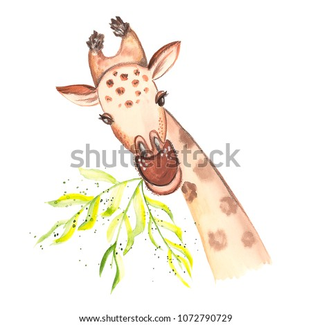 Illustration drawing of a giraffe paints close-up of a looking munching grass isolated