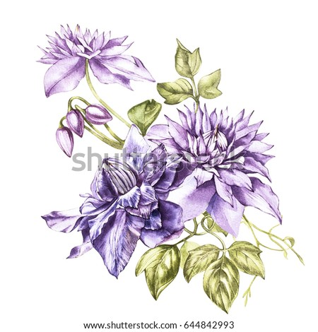 Illustration in watercolor of a clematis flower blossom. Floral card with flowers. Botanical illustration.