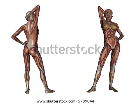illustration: musculature of one woman