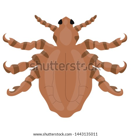 Illustration of a Crab louse or pubic louse insect