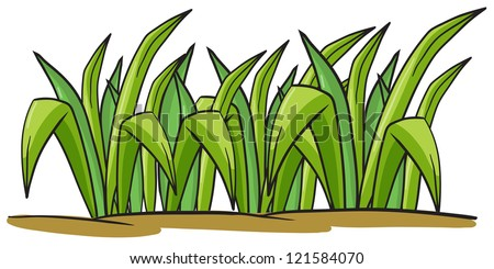 illustration of a grass on a white background