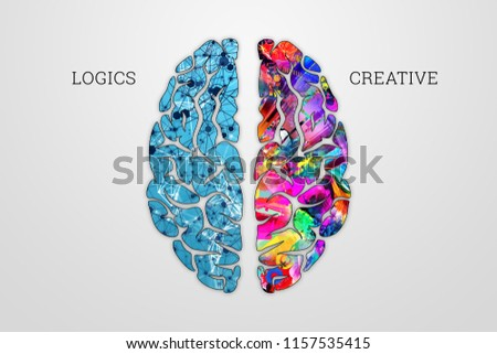 Illustration of a human brain, top view. Different halves of the human brain. The creative half and logical half of the human mind.
