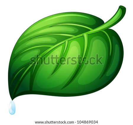 Illustration of a leaf on white -
