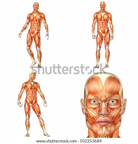 Illustration of a pack of four (4) male characters showing the human body anatomy with different poses isolated on a white background - 1of3