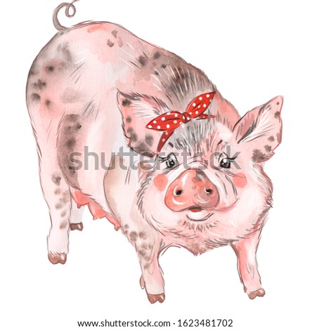 Illustration of a pig. Farm animal Animal for breeding.