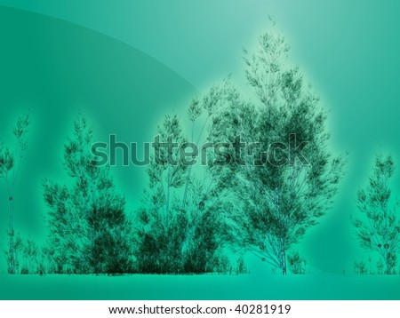 birch tree wallpaper. of irch trees,
