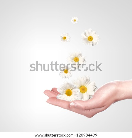 Illustration of camomile flower on white background