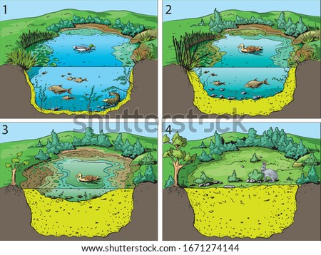 Illustration of four basic stages community succession in an open pond or swamp. Foto d'archivio ©