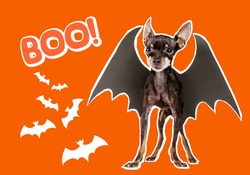Illustration of funny halloween background. Halloween symbols and word boom on orange background. Orange invitation to holiday halloween party. All Hallows' Eve decorations. Dog with mouse wings