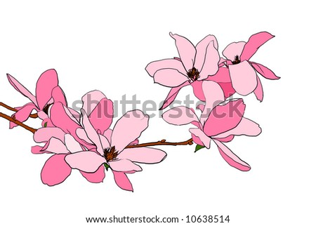 Illustration of magnolia flowers in full bloom