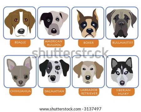 illustration of purebred dogs, cartoon dog portraits