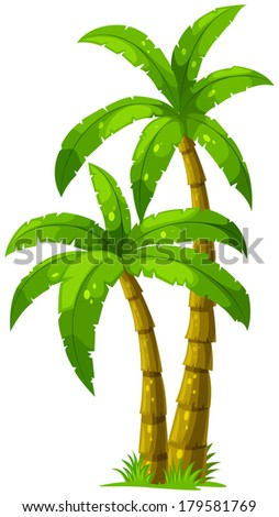 Illustration of the two palm trees on a white background