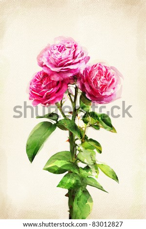 Illustration of watercolor rose on a vintage background