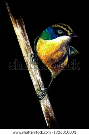 Illustration on black background of bird commonly called seven colors Foto stock ©