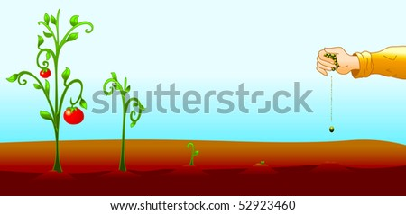 Illustration sequence, from the seeding to the plant of tomatoes - stock photo