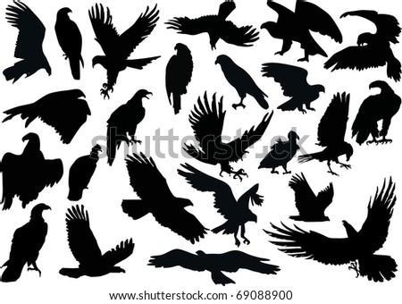 illustration with eagle silhouettes isolated on white background - stock photo