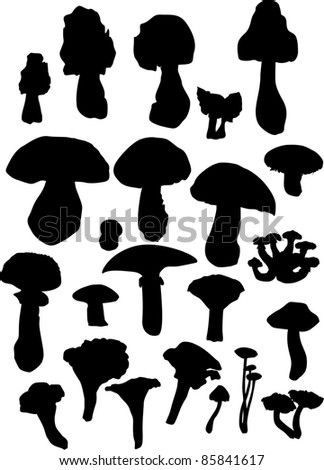 illustration with fungus silhouettes isolated on white background