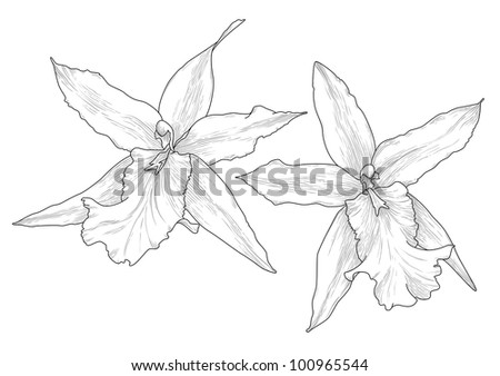 Illustration with orchid flowers in engraving style. Raster version.