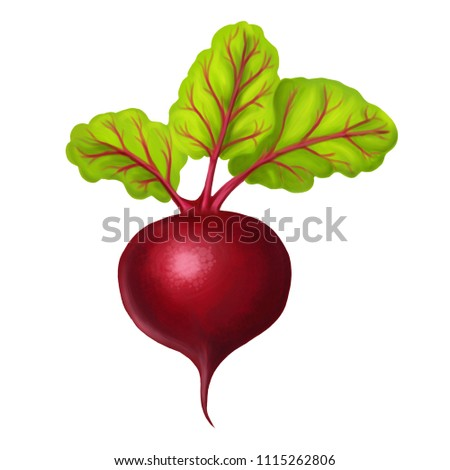 illustration with realistic beet on a white background isolated