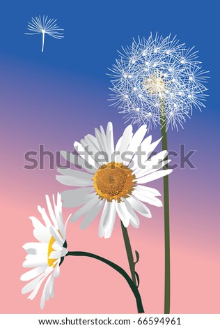 illustration with white dandelion and chamomiles