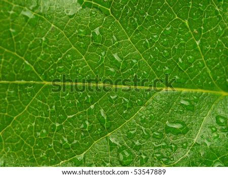 stock-photo-image-closeup-of-dew-drops-on-a-bright-green-leaf-53547889.jpg