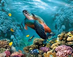 Image for 3d floor. Underwater world. Turtle. corals.