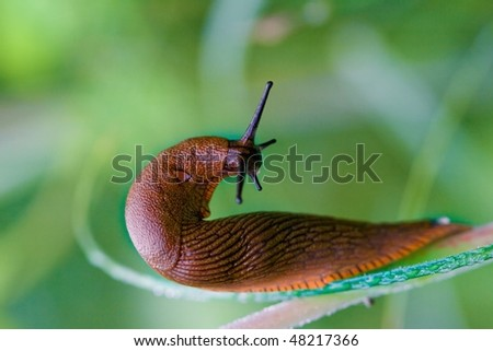 image from nature series: snail on stalk