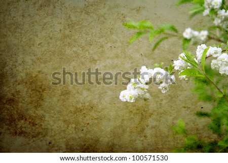 image from outdoor background series (plant and stone texture)