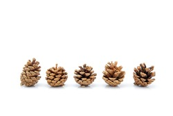 image group of pinecone isolated on white background, set of pine cone tree is symbol decoration Christmas holiday, object nature concept.