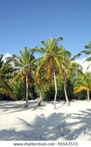 image of a beach with palm trees